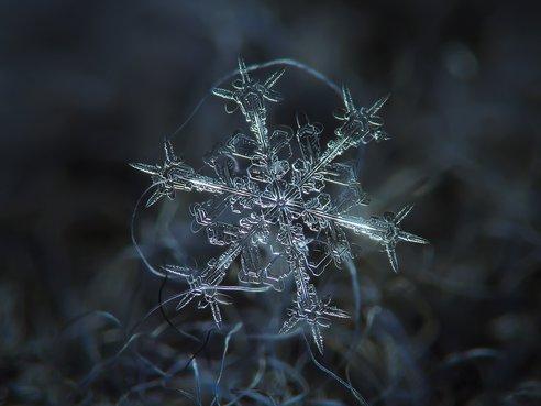 snow2.jpg.492x0_q85_crop-smart